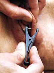 Clothespins pussy play